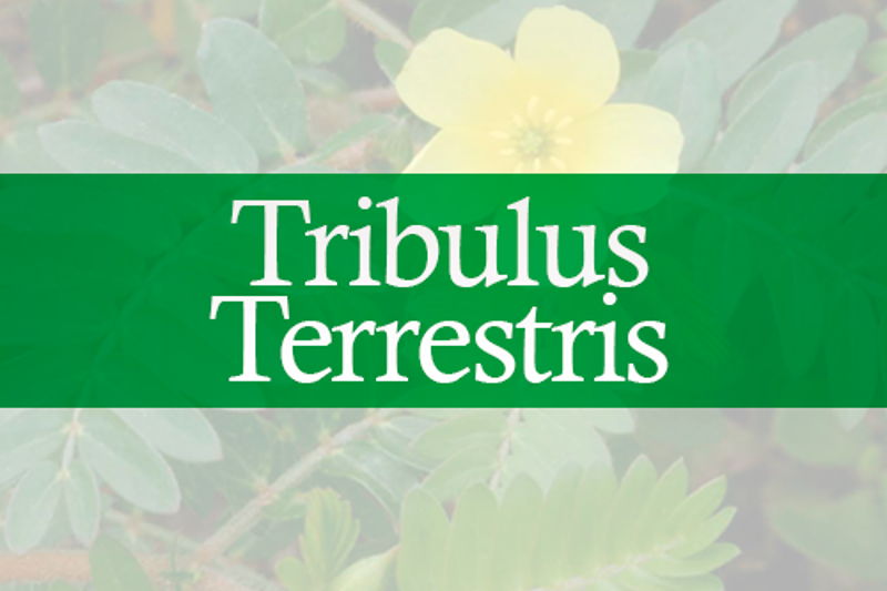 TribulusTerrestris